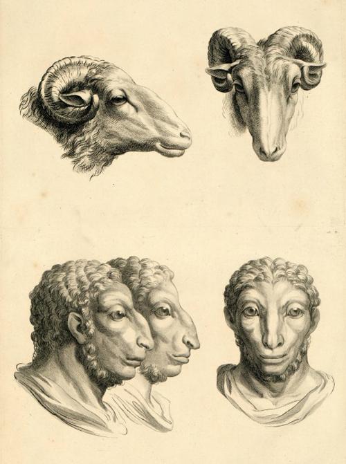La physionomie humaine comparée à la physionomie des animaux d'après les dessins de Le Brun (Paris, 1806)